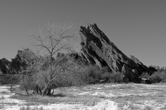Rock'n Tree, Roxborough State Park, CO